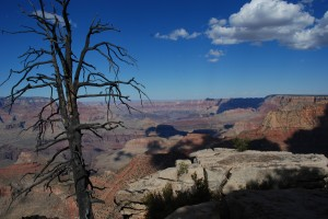 USA_08_grand_canyon_tree