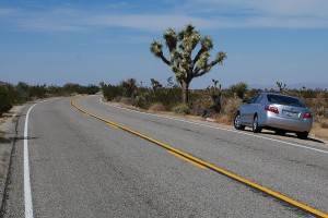 USA_08_joshua_tree