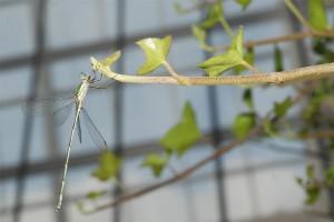 Onleefbaar? Libelle in mijn tuin met zicht op de de glazen geluidswal op de garage.